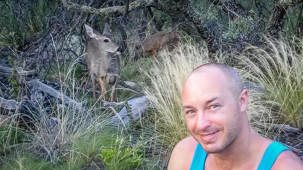 Carmen White-Tailed Deer