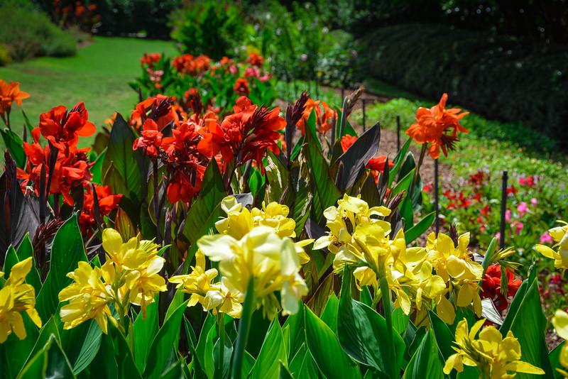 dallas botanical gardens