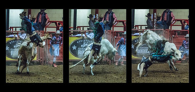 Going, going, gone! - Bull riding triptych #2