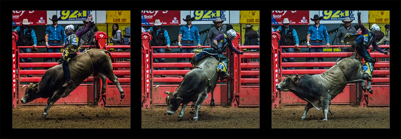 Going, going, gone! - Bull riding triptych #1
