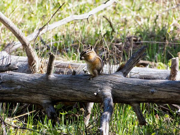 premier ecureuil
