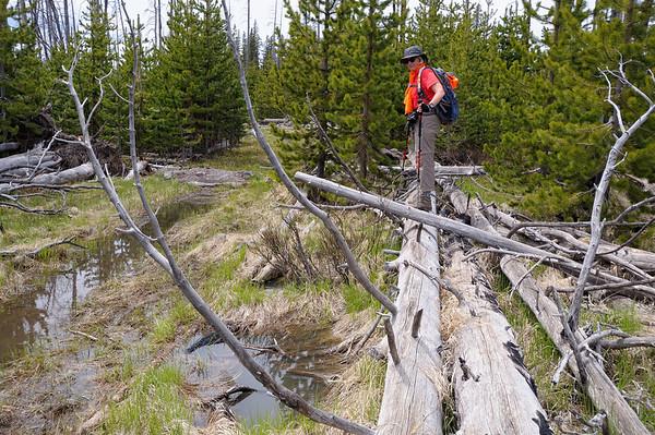 le pont n'est qu'un projet...Il faut se contenter des troncs d'arbres...perilleux!