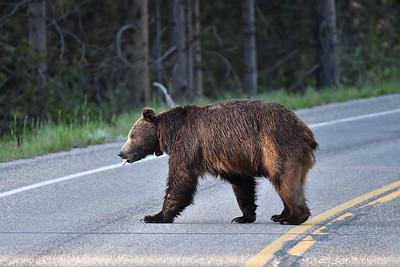 2016-06-10 Cascades Canyon et premier ours