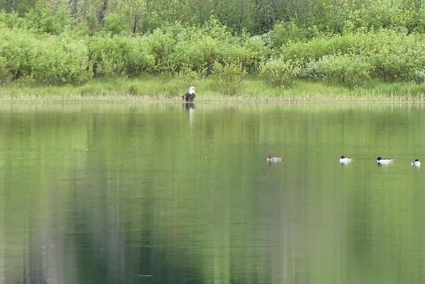 De l'autre côté du lac, zoom à fond et agrandissement max