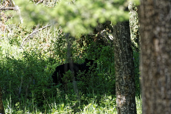 Un ours, fut très fugitivement