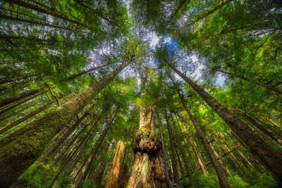 Avatar Grove, Vancouver Island
