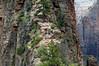 Angel's Landing 2: The path, Zion National Park, Utah, 6 September 2006