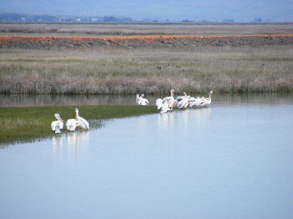 """Bear lake est célèbre pour le """"birding"""""""