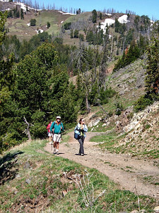 Location Information Mt Washburn Trail, located near Tower-Roosevelt, offers a moderately strenuous 6 mile roundtrip hike. The hike to the top of Mt. Washburn is one of the most popular hikes in Yellowstone. Two trails, each 3 miles (4.8 km) in length, switchback to the summit where expansive views of much of Yellowstone unfold below on clear, summer days. An enclosed observation area allows you to get out of the wind. Bighorn sheep are seen quite frequently during the summer on the upper parts of the trails. Harsh alpine conditions contribute to short growing seasons for the fragile alpine vegetation on the mountain. Please stay on the trails and do not approach sheep or other wildlife to help preserve the wildness of this area.  T