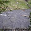 Le long de la Gibon river, en rentrant vers WestYellowstone, nous entendons les cris désespérés d'un bébé biche qui veut traverser la rivière pour rejoindre sa maman.<br /> Finalement, il se décide à traverser le torrent