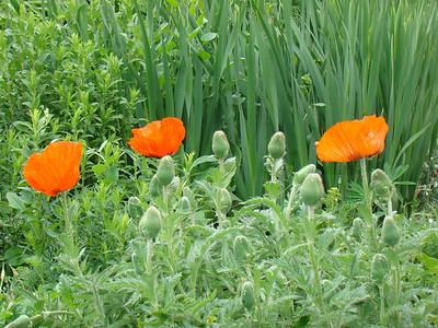 Les fleurs du SMOFA (2)