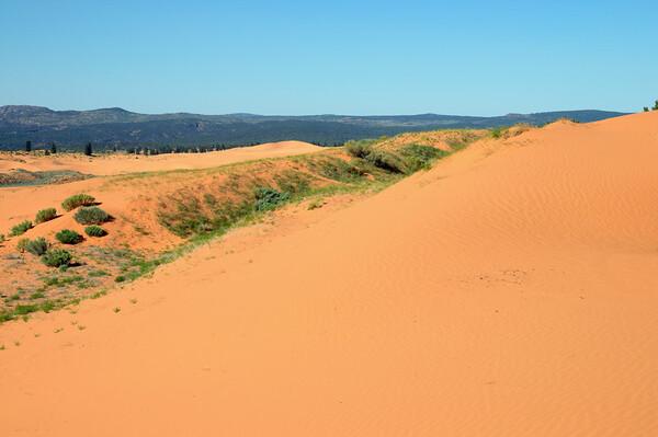 vue de Coral Pink Sand dunes (1)