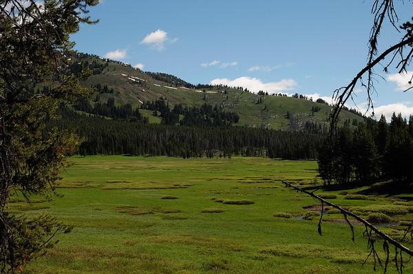 """les """"meadows"""" le long de Cascade creek"""