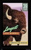 un timbre a été édité sur le bison!