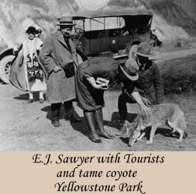 Il y a 80 ans, ça se passait comme ça à Yellowstone!!!