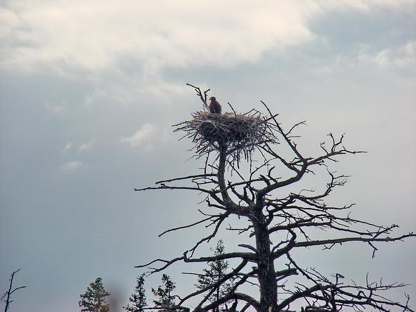joli le nid