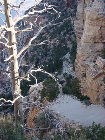 Le sentier, comme toute descente dans Grand Canyon, est assez vertigineux Pour l'instant, il n'y a personne!