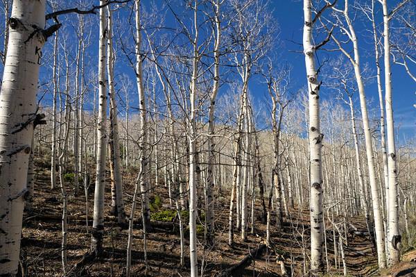 Le long de la montée, nous traversons ce magnifique bois de bouleau, sans bourgeons, alors qu'on est le 17 mai...Mais nous sommes  à 2800m