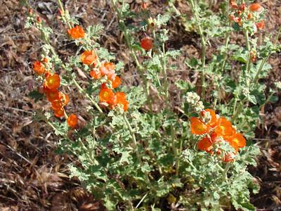des fleurs oranges trés photogéniques
