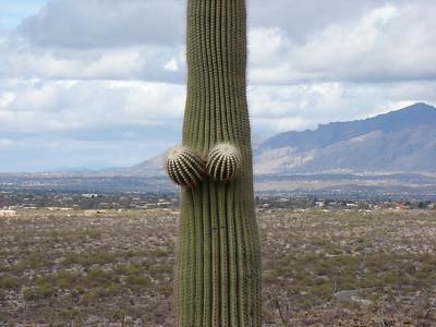 2010 22 Saguaro East