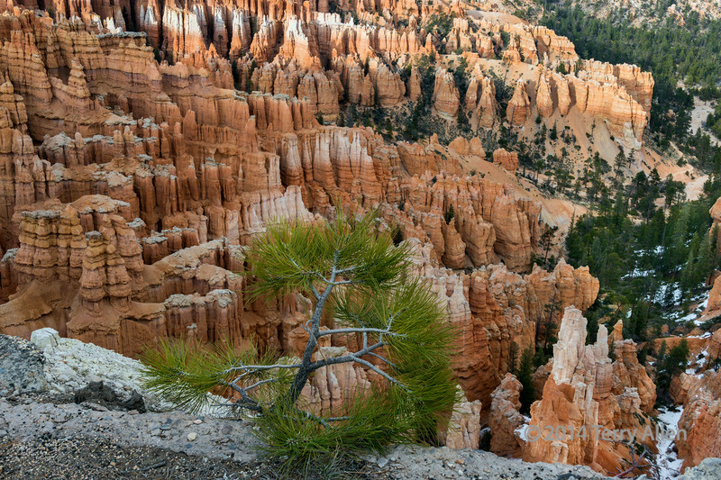 Rock formations with pine tree, Inspiration Point, Bryce Canyon, Utah