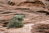 Sandstone cliff with striations and layers running in all directions, Glen Canyon, Arizona