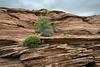 Sandstone cliffs and spring vegetation, Glen Canyon, Arizona