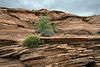 Sandstone cliffs and spring vegetation, Glen Canyon, Arizona