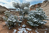 Snow in the high desert, White Pocket, Vermillion Cliffs NM, Arizona<br /> <br /> Notice the tiny figure of another photographer on the cliff at the top.