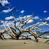 Driftwood Beach on Jekyll Island, GA.