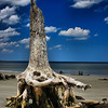 A lonely stump of dirftwood on Jekyll Island, GA.