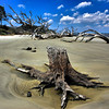 Driftwood Beach on Jekyll Island, GA.