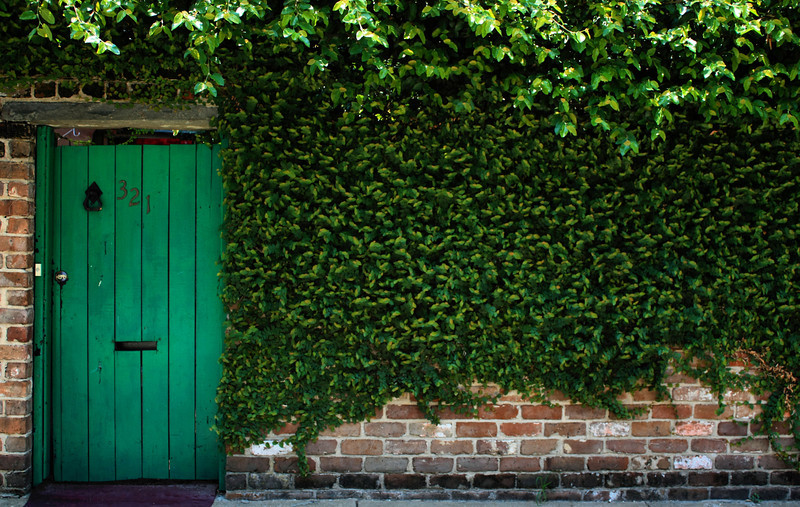 Ivy covered wall in the historic district in Savannah, GA.