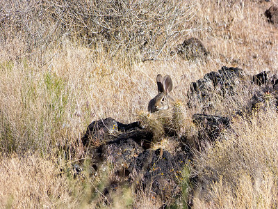 Le lièvre, le lézard et le cactus Pas mal, avec le zoom à fond et sans aucune optimisation