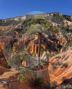 Bryce Canyon Fairyland Loop Trail Overlook Utah Animal View Point Royalty Free Stock Images - 015011 - 02-10-2014 - 7345x9148 Pixel