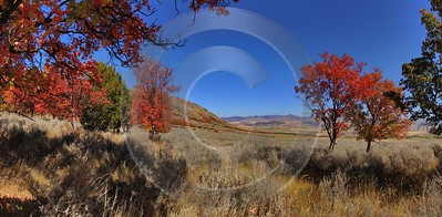 Preston Utah Maple Tree Autumn Color Colorful Fall Fine Art Prints For Sale Snow Order Park Winter - 011856 - 01-10-2012 - 14413x7076 Pixel
