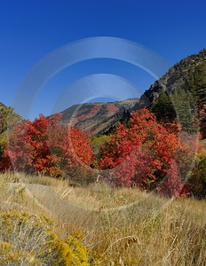 Smithfield Utah Maple Tree Autumn Color Colorful Fall Fine Art Landscapes Modern Wall Art - 011868 - 01-10-2012 - 7302x9434 Pixel