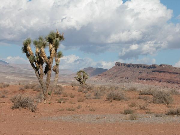 Desert near St George, Utah