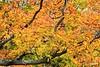 Leaves_D8F1175