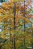 TreesnColors_D8F0856