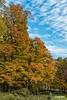 Trees_D8F1147