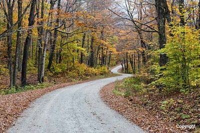 RoadNForest_D8F0999