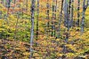 Forest_D8F0951