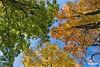 TreeColors_D8F1474