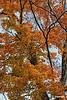 BranchesNColors_D8F1170