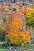 TreesNColors_D714036