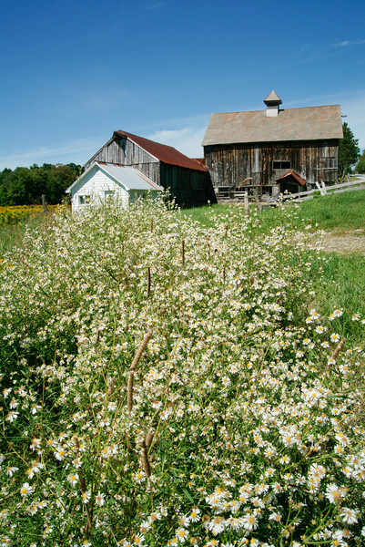 Barn on Route 100 (vertical)