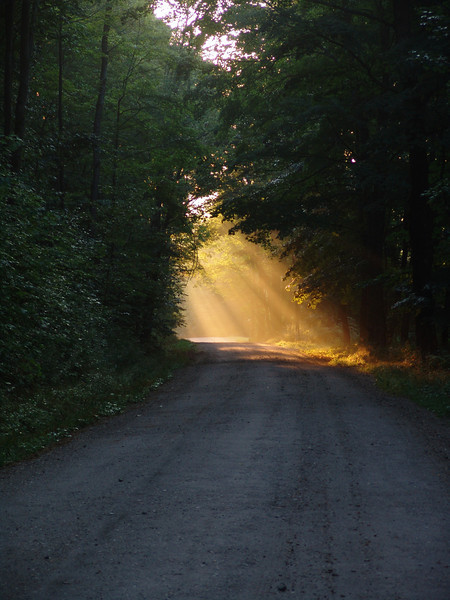 Rays on the Road
