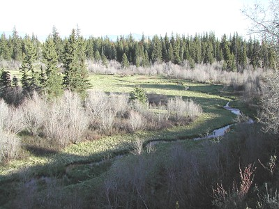 11 - Moose Meadows