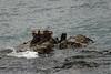 Otters. San Juan Islands, Washington, 2007